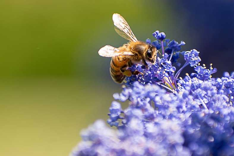 Wildlife-bee-magdalena-sztechman
